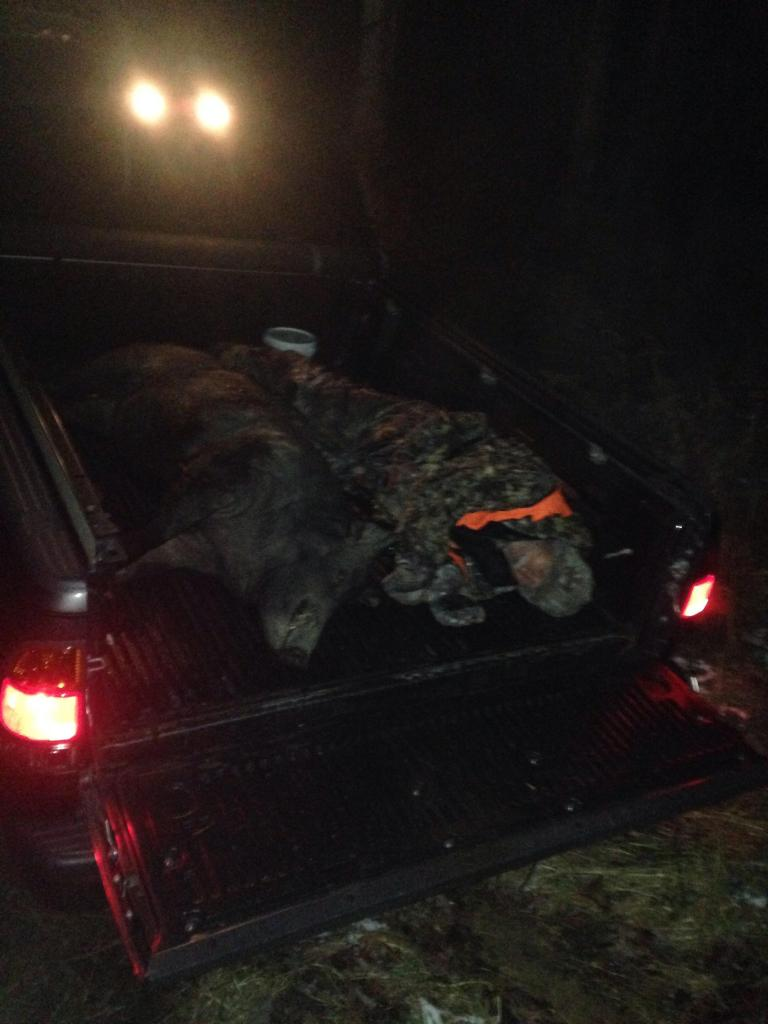 350 lb Wild Boar Hunt